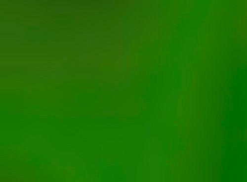 Наржавейка в листах с покрытием зеленого цвета